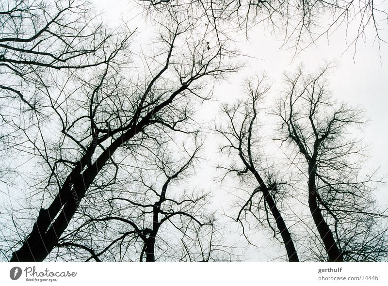 A few trees Forest Black Winter White Gray Cold Fog Bird Tree Branch Upward Tree trunk ramified Structures and shapes