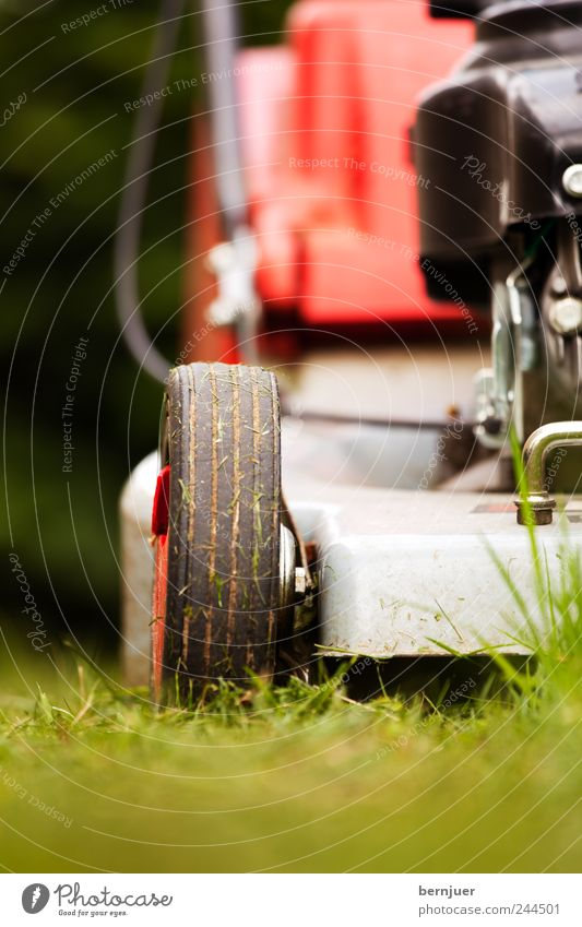 Plant Summer Far-off places Grass Garden Park Fear Lawn Wheel Machinery Blade of grass Engines Lawnmower Shallow depth of field Work and employment Mow the lawn