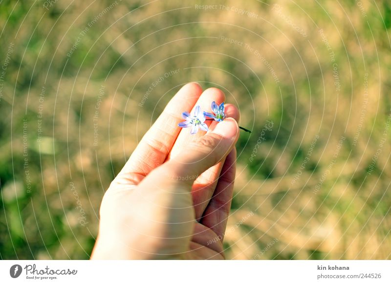 in your hand Summer Feminine Woman Adults Hand Fingers Spring Blossom Observe Blossoming To hold on Dream Faded Blue To console Hope Longing Transience
