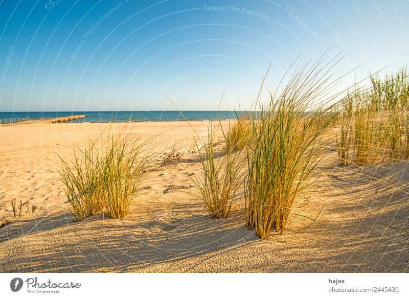 Beach at the Polish Baltic Sea coast Sand Maritime Idyll Tourism beach safe Ocean Blue Sky Sandy beach Poland far Empty Lonely Deserted Summer Sun