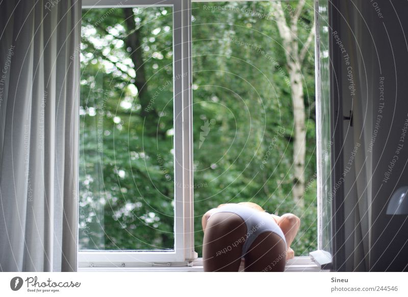 Woman Human being Green White Tree Feminine To talk Window Adults Legs Lamp Wait Stand Bottom Observe Curiosity