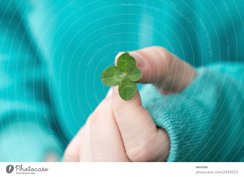 young hand in turquoise jacket holds four-leaf green clover by hand Fingers Cloverleaf luck spring Summer Thumb Plant flaked Sweater To hold on Four-leaved 4