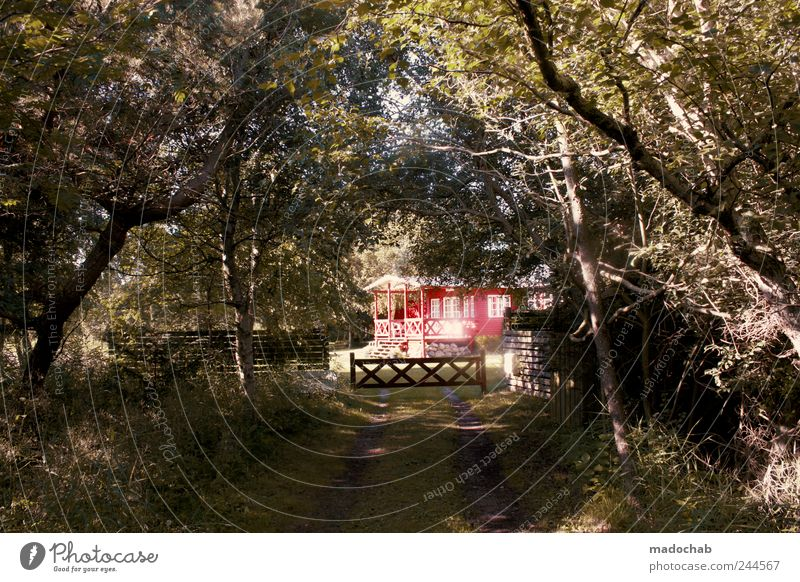 The way into the light Lifestyle Well-being Contentment Relaxation Calm Vacation & Travel Tourism Nature Landscape Summer Garden Forest Village