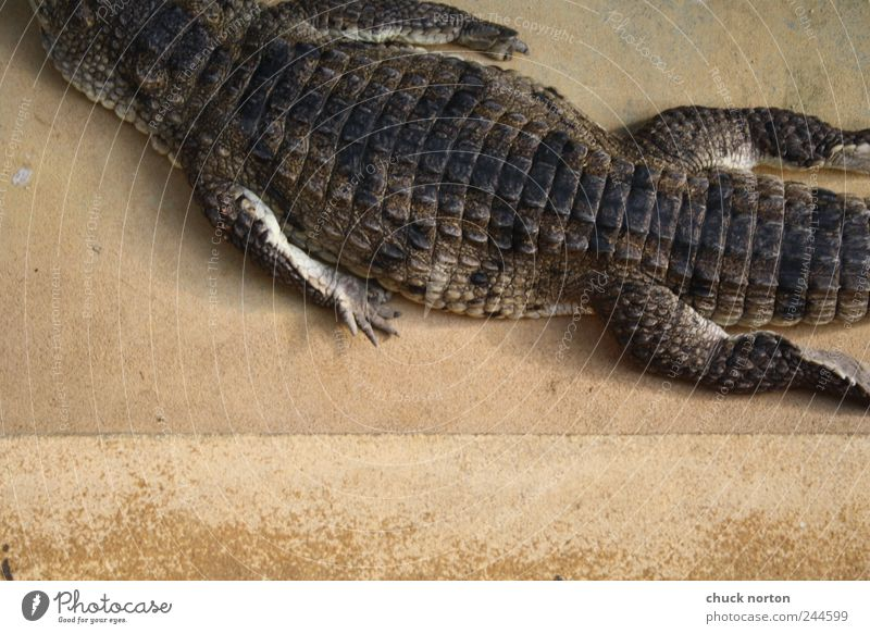moving out Wild animal Claw Zoo 1 Animal Loneliness Relaxation Crocodile Colour photo Interior shot Day Bird's-eye view
