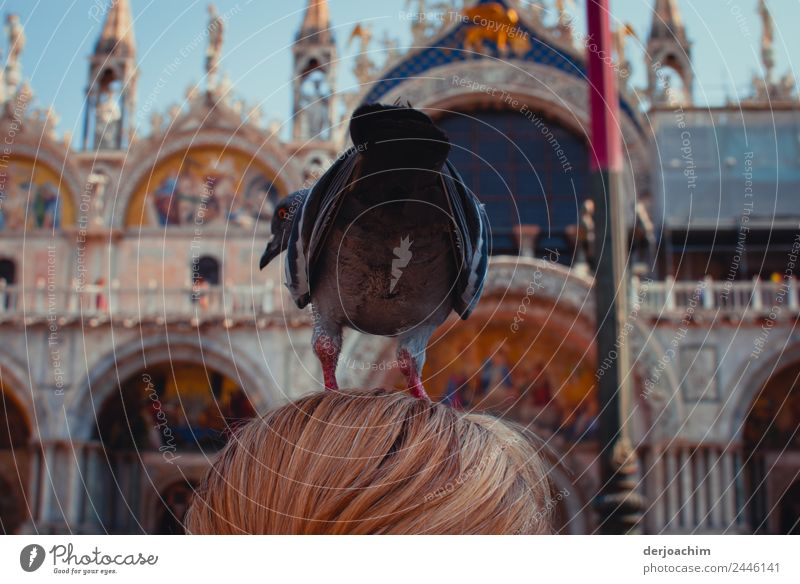 Point landing of a pigeon on the head . Joy Trip Tourism Summer Feminine Woman Adults Hair and hairstyles 1 Human being 45 - 60 years Beautiful weather Places