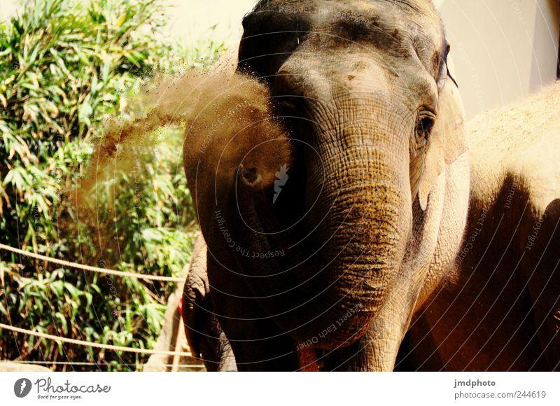 troöö Joy Trip Safari Circus Zoo Environment Nature Sand Animal Wild animal Romp Throw Fat Friendliness Happiness Happy Joie de vivre (Vitality) Enthusiasm