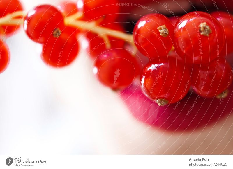 White Red Fruit Food Lips Feeding Redcurrant