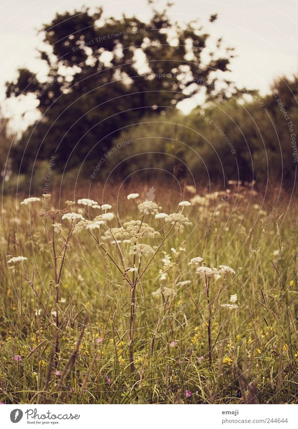 Nature Plant Meadow Landscape Grass Brown Bushes Foliage plant Common Yarrow