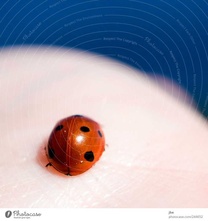 Nature Water Red Vacation & Travel Animal Spring Small Skin Contentment Esthetic Round Near Natural Wild animal Cute Ladybird