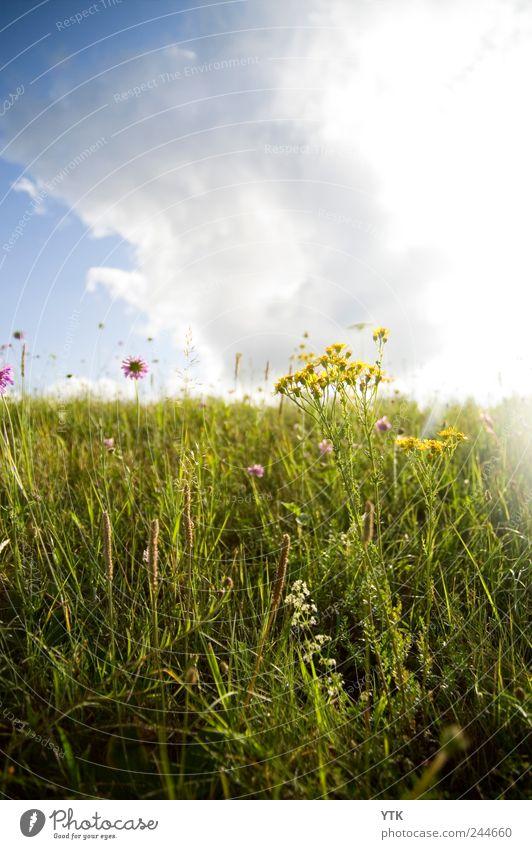 Nature Sky Sun Green Plant Flower Summer Calm Clouds Meadow Grass Landscape Park Environment Weather Gold