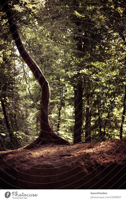 magic tree Nature Landscape Earth Summer Plant Forest Beautiful Colour photo Subdued colour Exterior shot Deserted Day