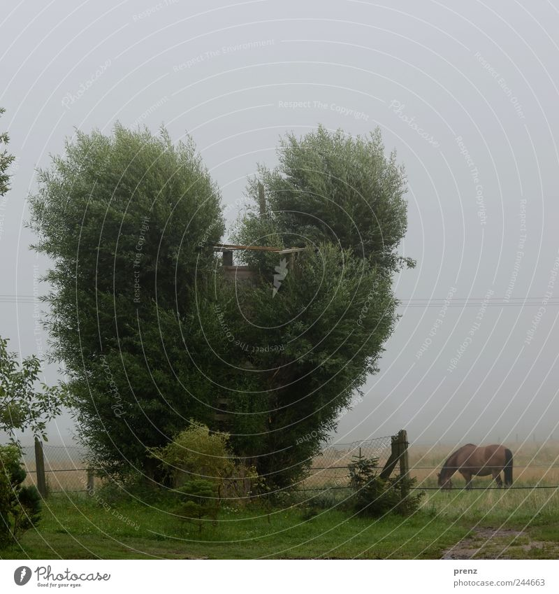 Heart for trees Environment Nature Landscape Plant Animal Weather Tree Meadow Field Farm animal Horse 1 Gray Green Pasture Willow tree Heart-shaped Fence