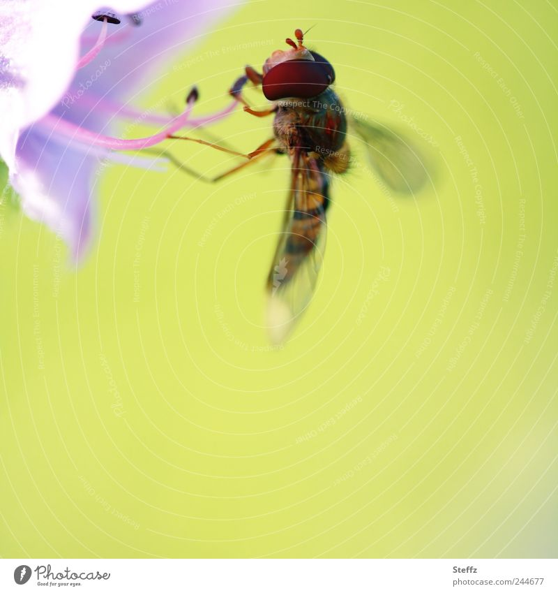 dock Environment Nature Sunlight Summer Plant Flower Blossom Flower stem Calyx Flowering plant Animal Fly Wing Hover fly Insect Legs To feed Small