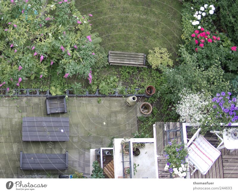 abyss Living or residing House (Residential Structure) Garden Armchair Chair Table Balcony Summer Plant Flower Grass Bushes Rose Downtown Apartment house