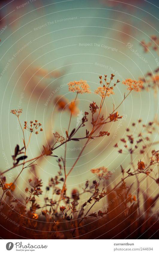 Blue Flower Yellow Meadow Dream Brown Perspective Kitsch Smoke Bouquet