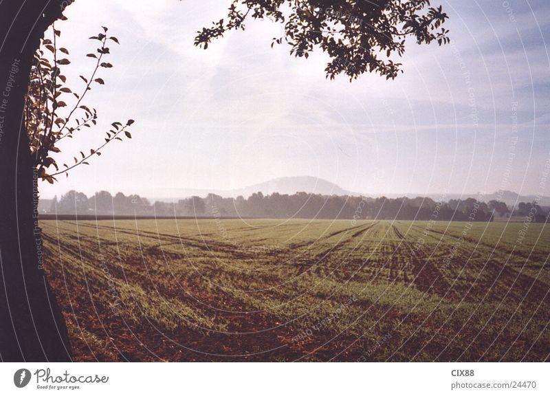 Morning fog 2 Fog Field Loneliness Tree Street Americas Sky
