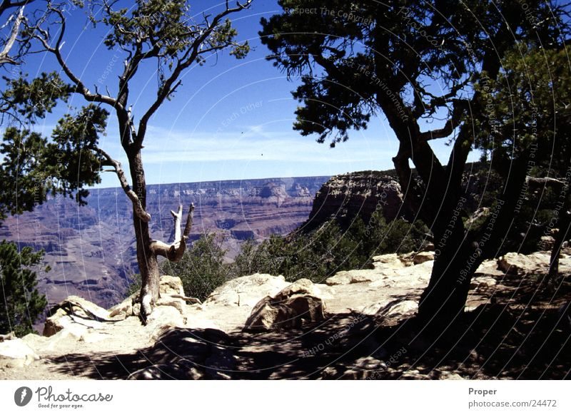 Tree USA Canyon National Park Natural phenomenon Arizona Miracle of Nature Grand Canyon