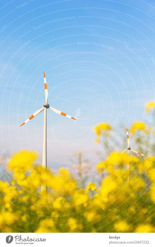 Wind energy regenerative Energy industry Renewable energy Wind energy plant Cloudless sky Spring Summer Beautiful weather Agricultural crop Oilseed rape flower