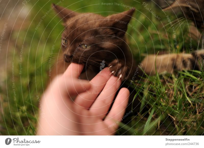 Cat Human being Nature Hand Green Plant Animal Love Environment Meadow Movement Garden Happy Baby animal Brown Wild