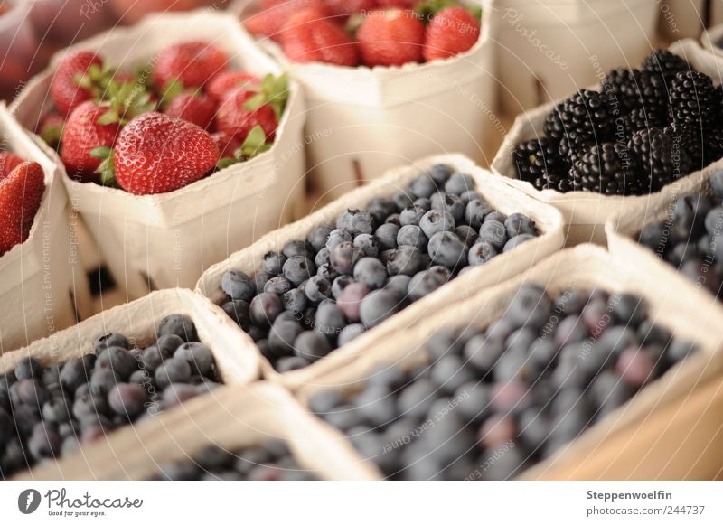 berry collection Food Fruit Blackberry Strawberry Blueberry Nutrition Picnic Organic produce Vegetarian diet Healthy Select Paying Violet Red Sweet