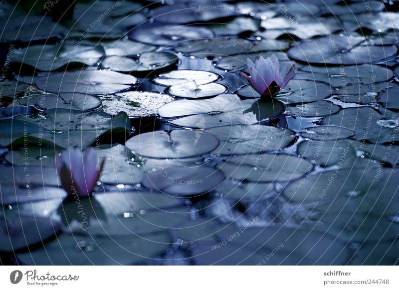Nature Plant Flower Leaf Dark Death Blossom Sadness Lake Hope Grief Transience Blossoming Goodbye Pond Graceful