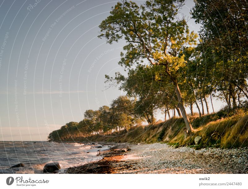 Leaning coast Environment Nature Landscape Plant Water Cloudless sky Horizon Beautiful weather Wind Tree Bushes Coast Baltic Sea Island Fehmarn Stand Growth