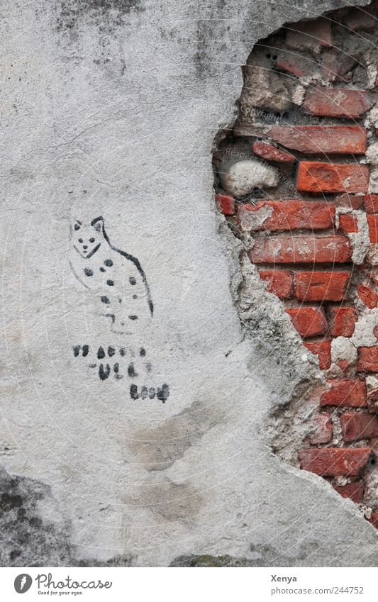 Old Red Wall (building) Gray Wall (barrier) Stone Cat Graffiti Broken Brick Decline Plaster Flake off Mural painting
