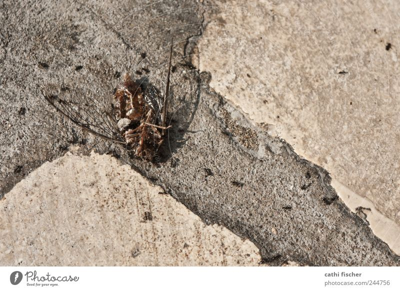 feast Dead animal Fly Beetle Wing Group of animals To feed Hunting Lie To dry up Firm Delicious Brown Death Insect Cicada Ant Column of ants Cruel Stone Ground