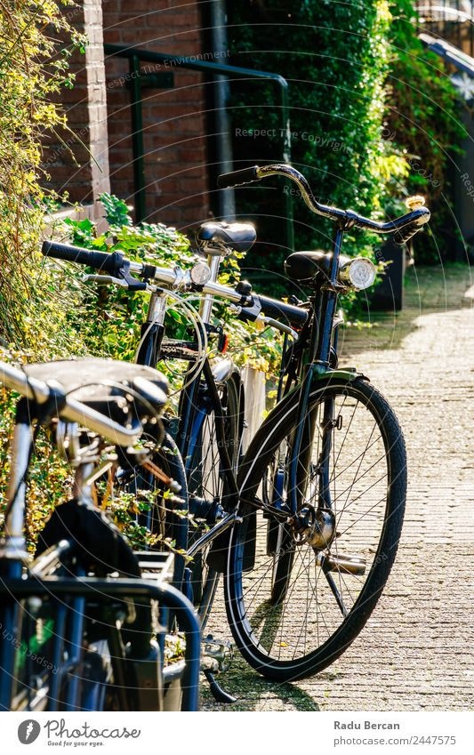 Bicycles Near Dutch Houses In Amsterdam City Vacation & Travel Tourism House (Residential Structure) Cycling Autumn Beautiful weather Small Town Capital city