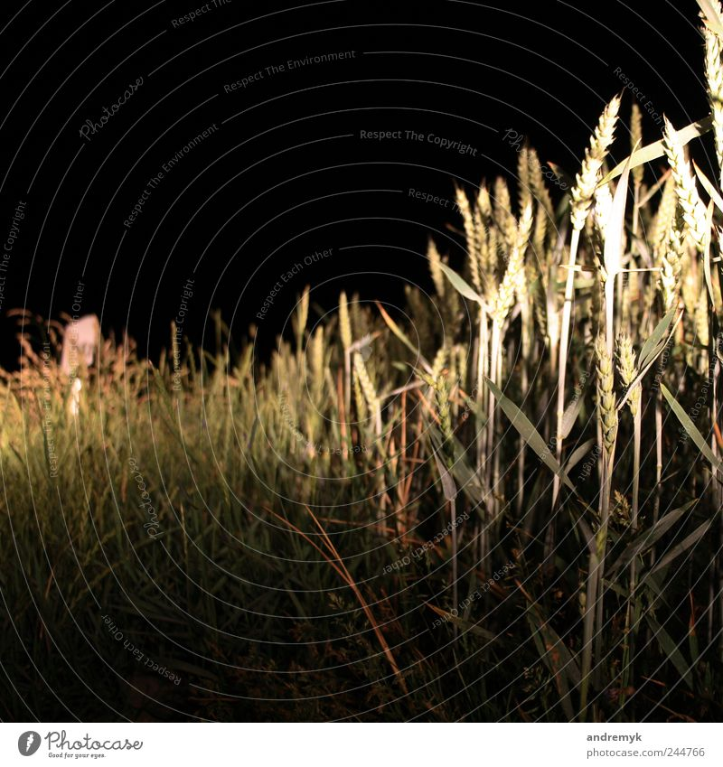 roadside Environment Summer Plant Grass Grain Street Roadside Yellow Gray Green Black Colour photo Subdued colour Exterior shot Close-up Deserted Copy Space top
