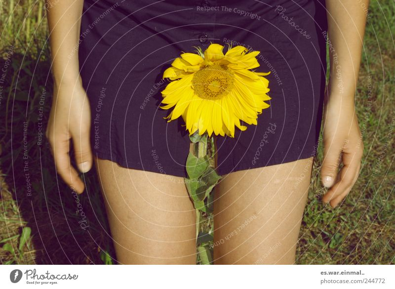 Beautiful Flower Feminine Blossom Sunflower Cast Faded Sexual practices To dry up Gender Language Colloquial speech Vanilla sex