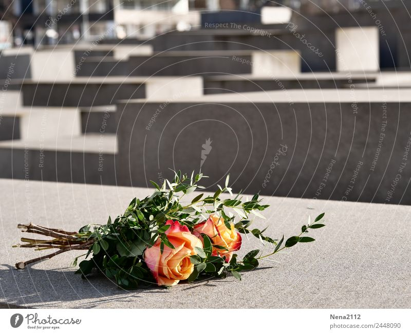 Town Flower Berlin Gray Gloomy Culture Concrete Tourist Attraction Grief Landmark Rose Capital city Bouquet Downtown Monument Pain
