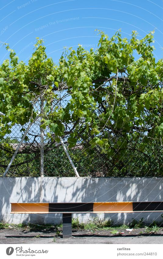 parking space Bushes Growth Crash barrier Striped Black Yellow Green Blue Fence Wire netting fence Pole Protection Wall (barrier) Parking lot Barrier Tendril