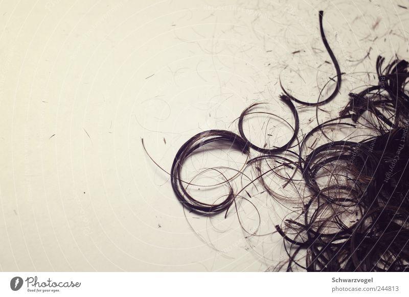Hair and hairstyles Ground Change Services Hairdresser Curl Cut Revolt Abbreviate