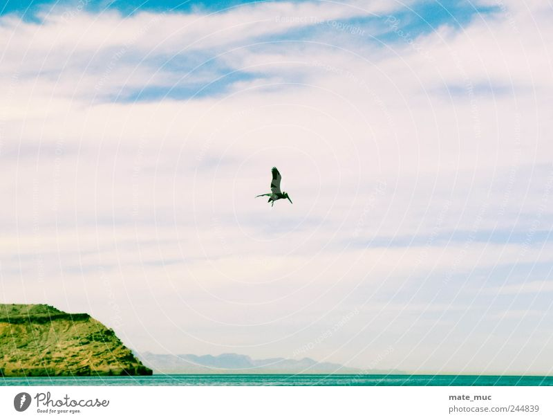 The sky is mine Animal Bird 1 Flying Free Freedom Colour photo Exterior shot Deserted Morning Light