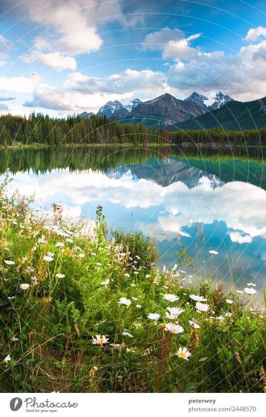 Nature Summer Blue Beautiful Green White Tree Forest Mountain Meadow Lake Swimming & Bathing Gray Contentment Joie de vivre (Vitality) Bushes