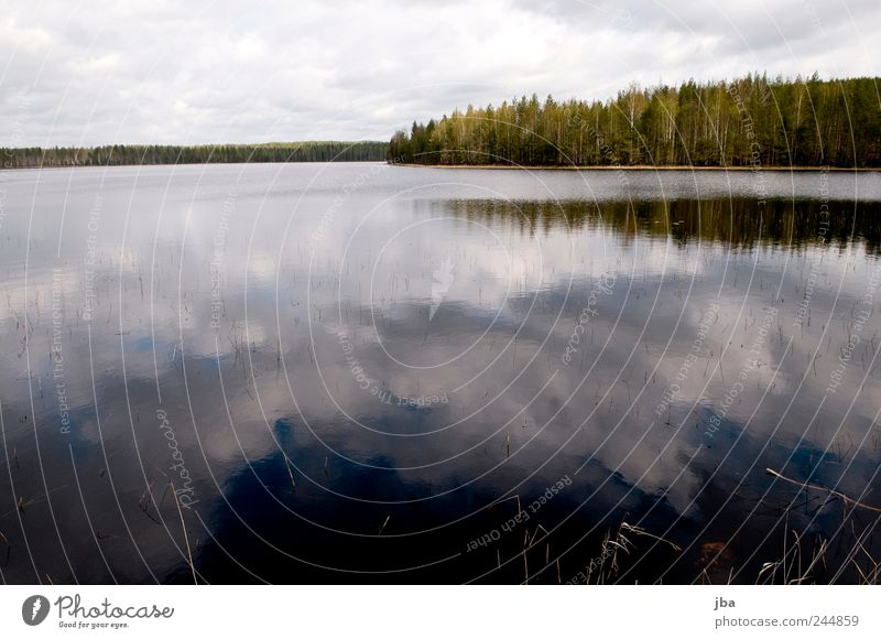 cloud reflection Vacation & Travel Trip Nature Landscape Water Sky Clouds Forest Lake Finland Blue White Reflection Smoothness Blade of grass Coast Colour photo