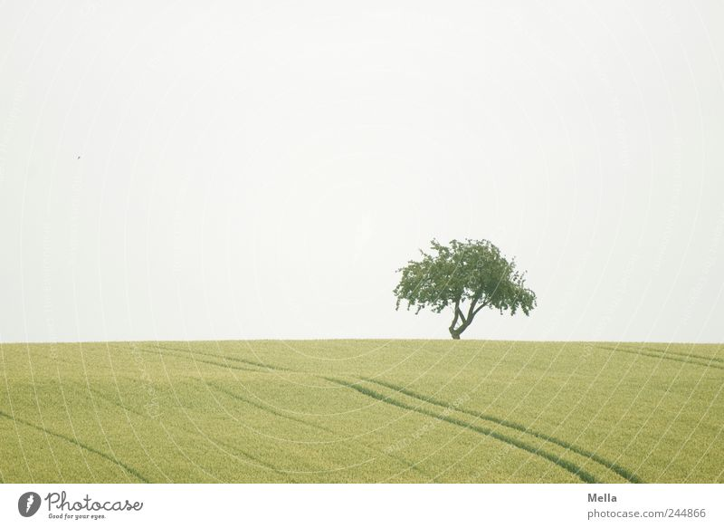Nature Tree Green Calm Landscape Environment Field Growth Natural Agriculture Agriculture Real estate Sustainability Grain field