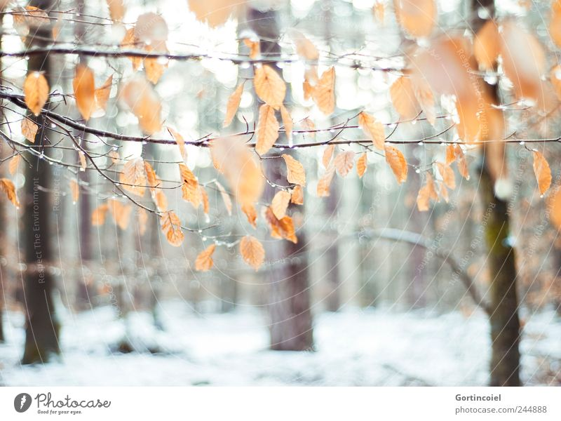 Nature Beautiful Tree Leaf Forest Cold Snow Environment Ice Frost Winter forest Winter's day Snow layer Winter mood Deciduous forest