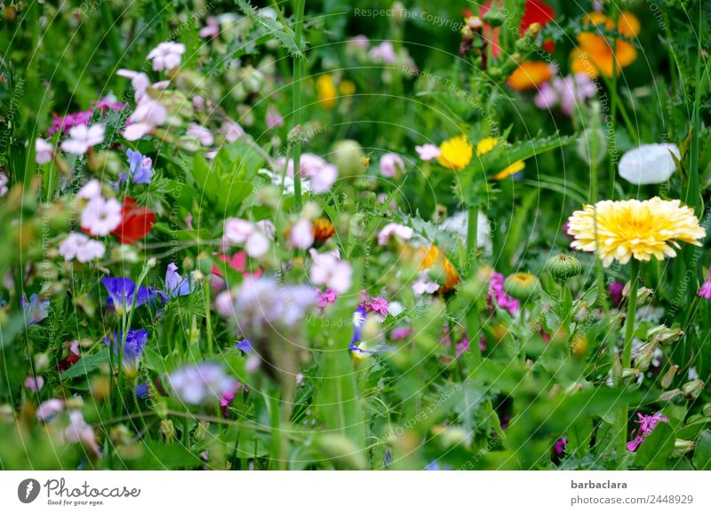motley summer meadow Plant Summer Flower Meadow Flower meadow Blossoming Happiness Fresh Multicoloured Green Moody Joy Romance Colour Climate Nature Optimism