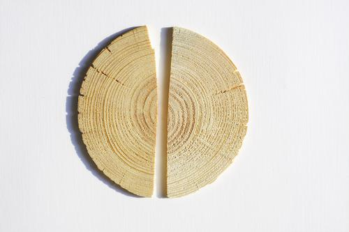 wood Nature Tree Flower Wood Good Wooden board Half Divided Broken Annual ring Slice Middle heartwood Column Colour photo Subdued colour Close-up Detail
