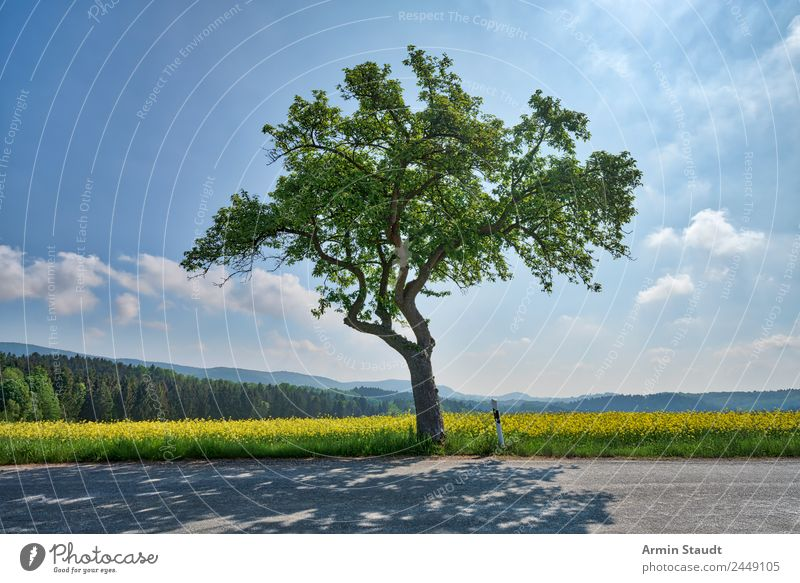 Tree - Street - Rapsfeld Lifestyle Style Harmonious Environment Nature Landscape Air Sky Clouds Sun Spring Climate Beautiful weather Motoring Country road