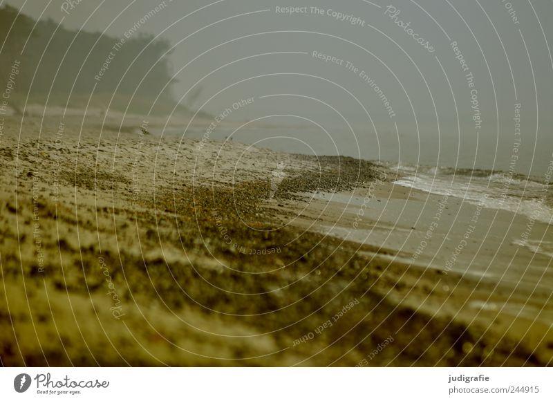 Nature Water Beach Dark Cold Landscape Rain Moody Coast Environment Fog Climate Threat Wild Natural Baltic Sea