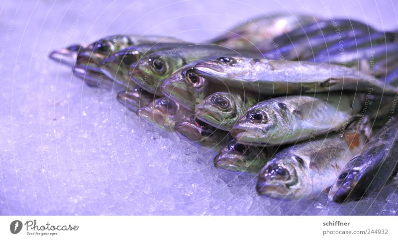 Yes, isn't it Friday? Group of animals Lie Fish Mackerel Smelly Nutrition Food Fishery Markets Offer Marine animal Delicious Ice Interior shot