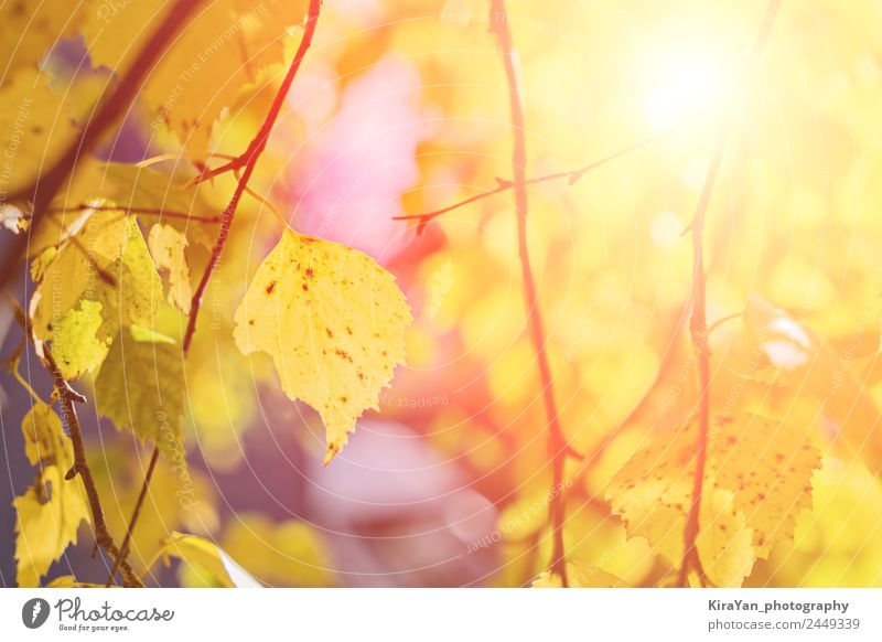 Golden autumn season concept Nature Plant Colour Beautiful Sun Tree Leaf Forest Yellow Autumn Natural School Copy Space Brown Bright Park