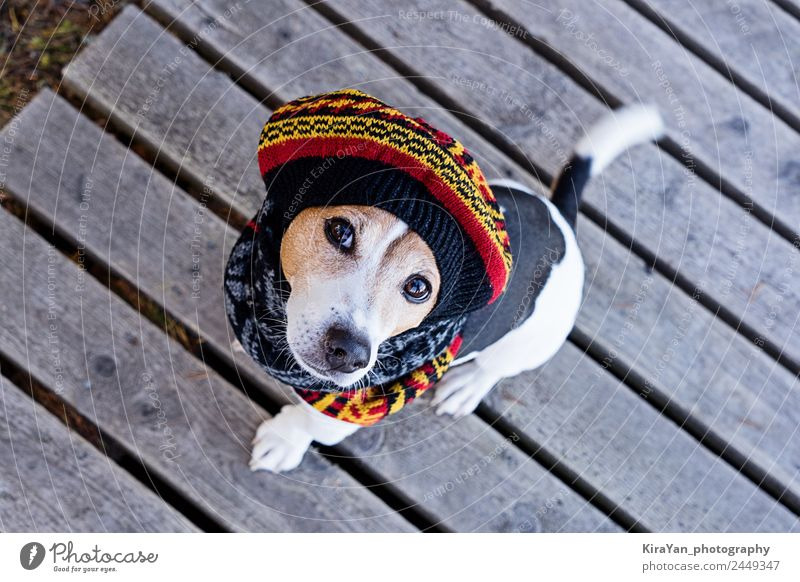 High angle view of dog wearing in knitted beret Vacation & Travel Dog Animal Winter Autumn Funny Style Small Fashion Weather Sit Clothing Cute Dress Seasons Pet