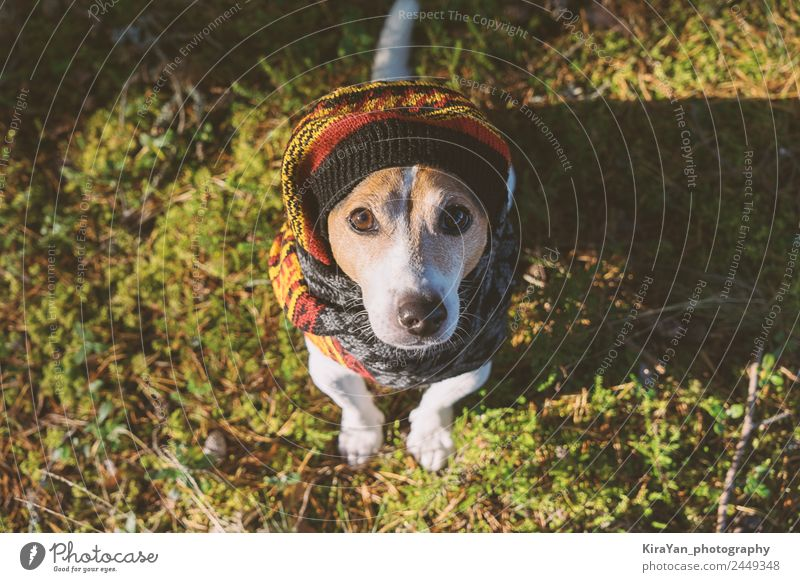 Care of dog health in the cold season walking Style Winter Animal Autumn Weather Forest Fashion Clothing Accessory Scarf Pet Dog Sit Small Funny Cute Green care