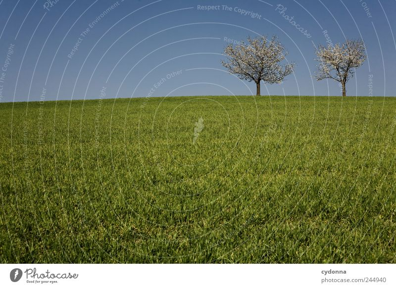 Nature Green Beautiful Tree Calm Far-off places Relaxation Environment Landscape Life Meadow Freedom Grass Spring Blossom Dream