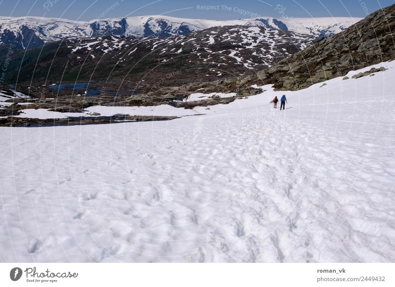 who took Big Foot? Environment Nature Landscape Plant Earth Spring Beautiful weather Mountain Bright White trolltunga troll tongue Vacation in Norway hike