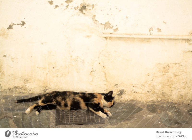 Cat Animal Calm Relaxation Wall (building) Wall (barrier) Brown Sleep Break Pet Siesta Comfortable Love of animals Oversleep Goof off Free-living